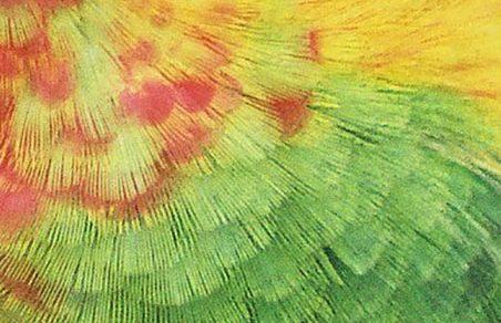 groenwang veerstructuur
